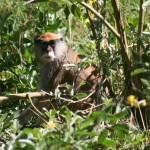 Un macaque amical