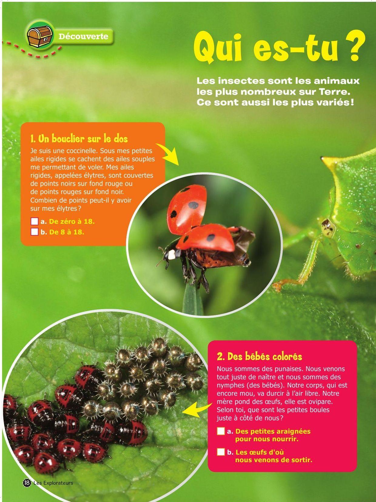 Insectes_1_EXP06_18.pdf-1